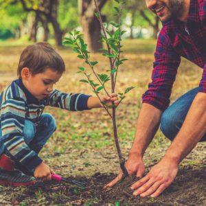 биоудобрения, НЕОТЕХ БИО, советы, уход, органические биостимуляторы роста растений, удобрения, пересадка деревьев, мульча, биостимуляторы роста на основе морских водорослей